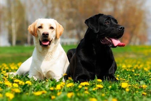 Dos perros juntos sentados en el campo
